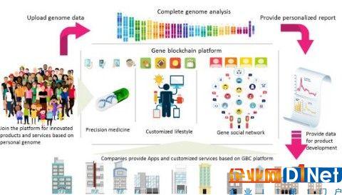 区块链生态系统基因序列介绍